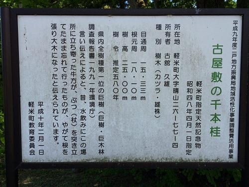 古屋敷の千本桂5