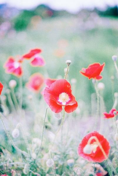 近所の花畑5