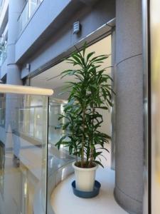 植物レンタル設置例②