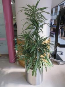 植物レンタル設置例①