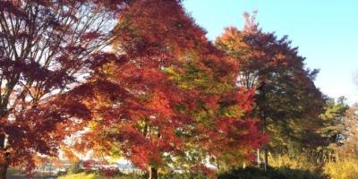 八戸市北インター付近の公園