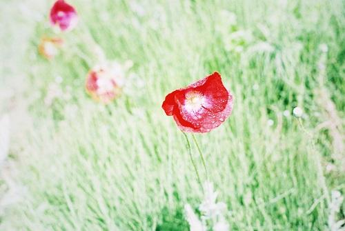 近所の花畑2