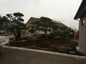 樹木移動④