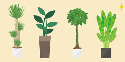 八戸でオススメの観葉植物